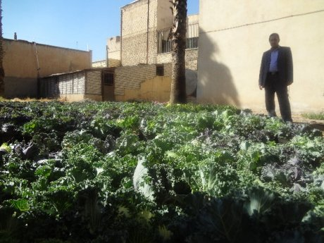 خرید 8000 گل و کاشت در میادین شهر پلدختر